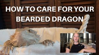 HOW TO CARE FOR YOUR BEARDED DRAGON! | A BEGINNERS GUIDE