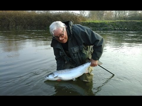 Atlantic Salmon on the fly   Harry's 15lb Springer