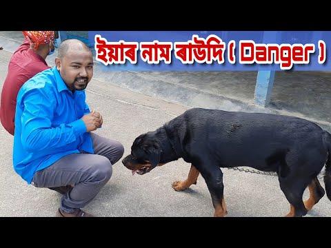 Suven Kai In Dog School , Enjoy with Ripun & Nabanita