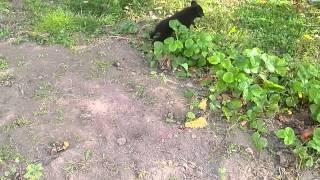 �������� ���� Пёс энерджайзер ))) ������