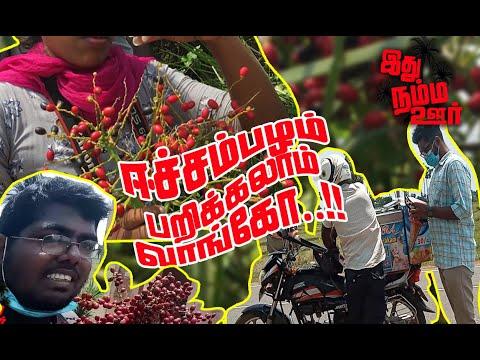 ஈச்சம்பழம் பறிக்கலாம் வாங்கோ | இது நம்ம ஊர் | Uthayan TV | Jaffna