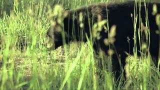 "Randy Brock for VT Governor - ""Bears"""