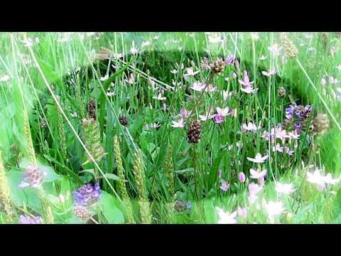Flower Pastures, Germany - For Elyse, Ludwig van Beethoven