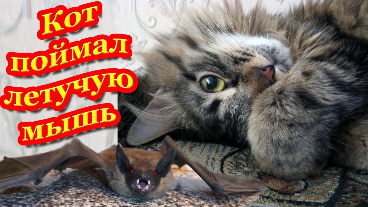 Кот поймал летучая мышь