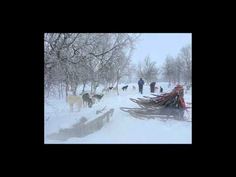 SNOW DOGS - working dogs in the Arctic