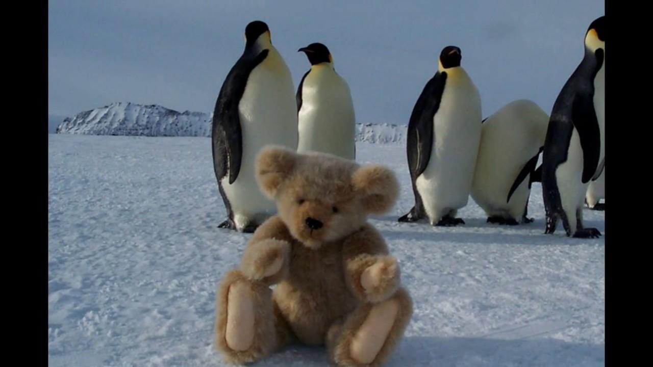 Где живет больше пингвинов на Северном полюсе или на Южном