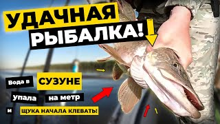 Удачная рыбалка Вода в Сузуне упала и щука начала клевать