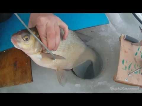 зимняя рыбалка на леща паша с уралмаша