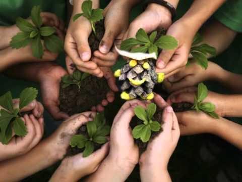 растения тему берегите на класс 3 картинки в