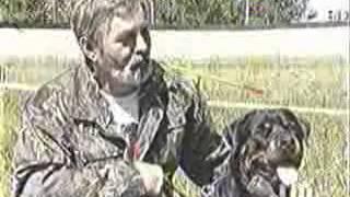ГТ о выставке собак 2 июня 2007 года