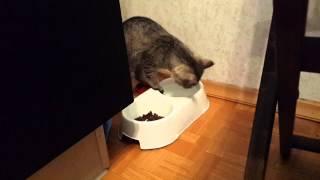 Котенок пьет рукой
