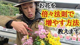 【切るだけで増える】お花をたくさん咲かせるコツ教えます 【園芸】【ガーデニング】【初心者】【剪定】