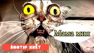 Аффтар жжет | Видео приколы про животных | Смотреть бесплатно самые смешные до слез ютуб с животными