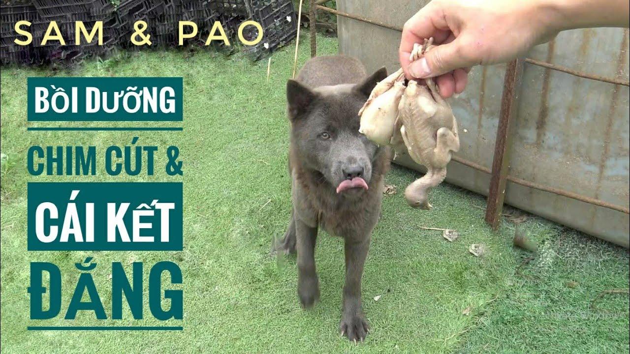 """(SAM & PAO) - Cho Ăn """"Chim Cút"""" & Cái Kết Đắng Lòng.../ NhamTuatTV - Dog in Vietnam"""