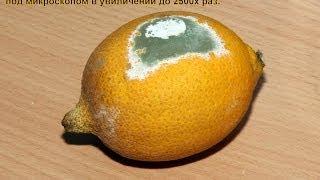 Лимонный сок и плесень под микроскопом....