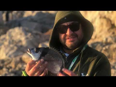 Rockfishing - Spot interessante, molte mangiante e solo un sarago preso. Esche in soluzione  salina