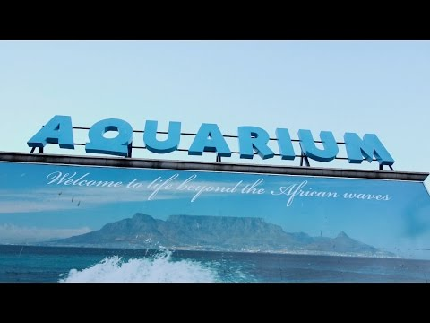 Travel Massive Cape Town. Two Oceans Aquarium with WTM Africa.