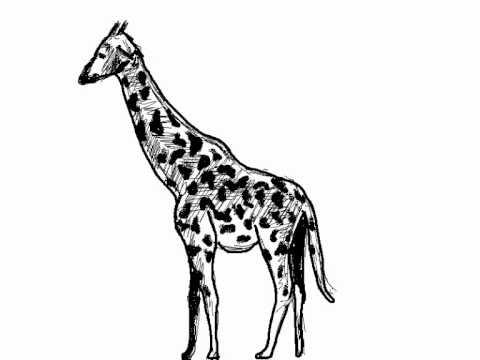 c243mo dibujar una jirafa paso a paso giraffe drawing
