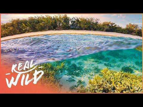 The Secrets Of The Oasis [Australian Desert Animal Documentary]   Real Wild