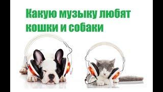 Какую Музыку Любят Кошки И Собаки & Музыка Для Кошек и Собак. Ветклиника Био-Вет