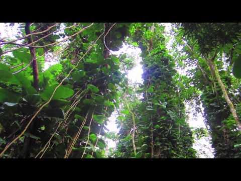 oahu-bike-and-hike-in-a-rainforest