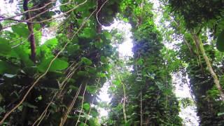 Bike & Rainforest Hike