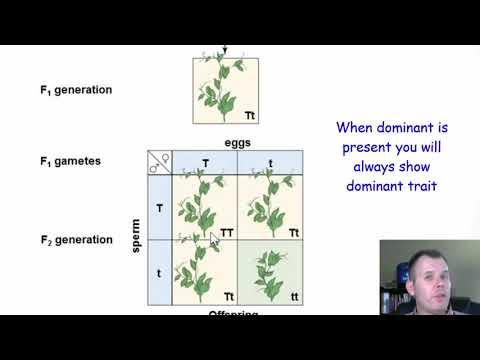 Gregor Mendel And Genetics