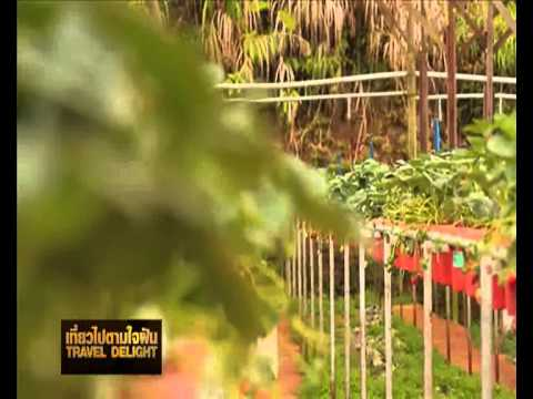 Hatyai to Cameron Highlands Malaysia II by Sunny Tours Hatyai