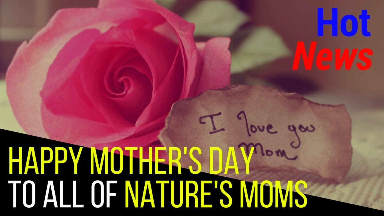 Happy Mothers Day 2017 Happy Mothers Day In Spanish Happy Mothers