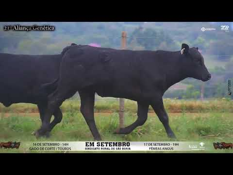 LOTE 085