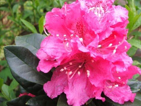 f915d7ad630148 Laat ons een bloem (in D) | Kampvuursongs
