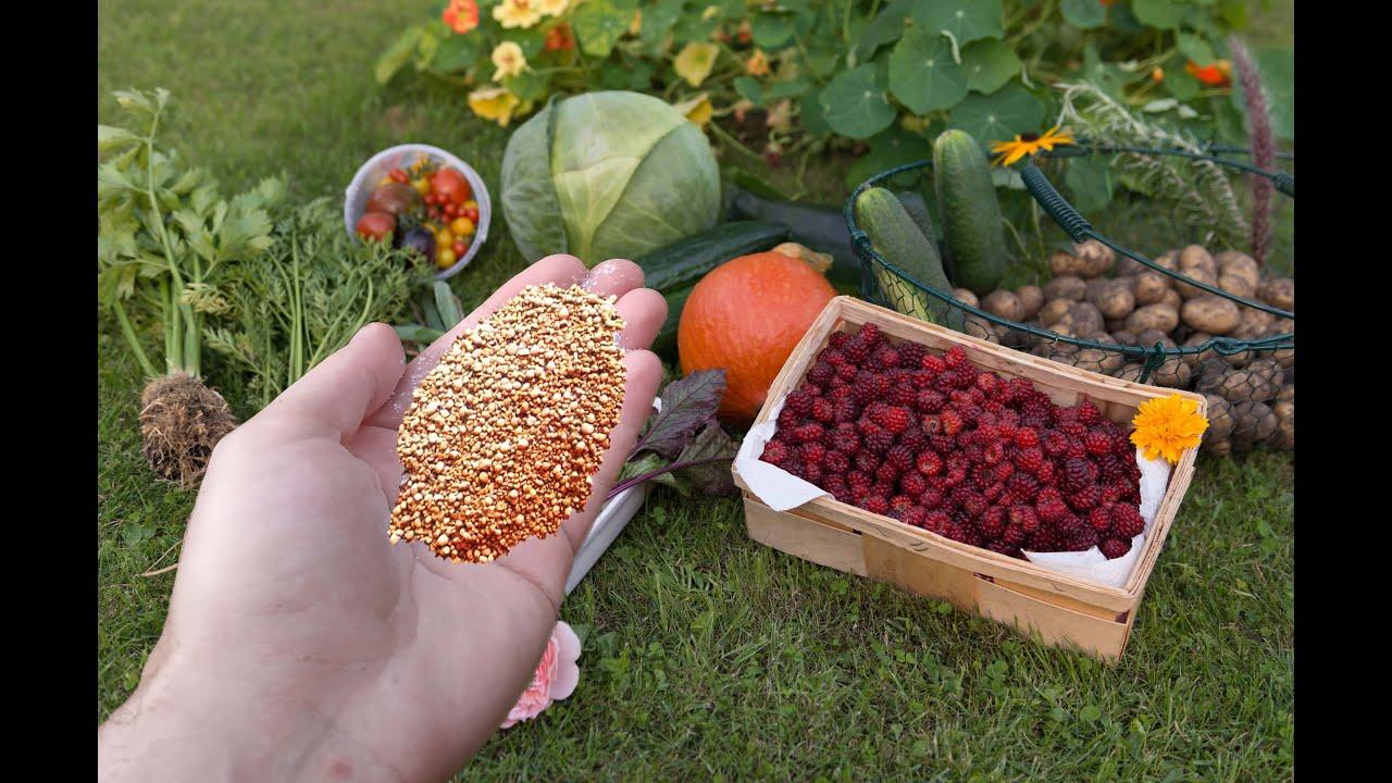 Щепотка в землю осенью и вас засыпет тоннами урожая в следующем году! Сыплю в почву осенью это!