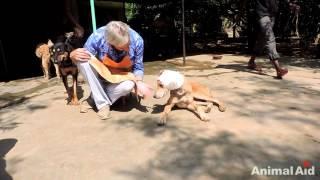 這隻剩一口氣的狗狗頭上已經長滿蛆 但卻發生了「九週奇蹟」! thumbnail