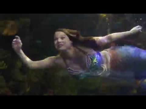 Mermaids practice at the Virginia Aquarium
