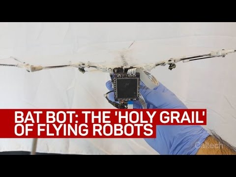 Bat Bot flying robot takes to the air