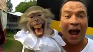 Прикол с обезьяной  Давай поорем!