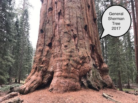 Sequoia National Park, CA - May, 2017 - Visiting General Sherman Tree