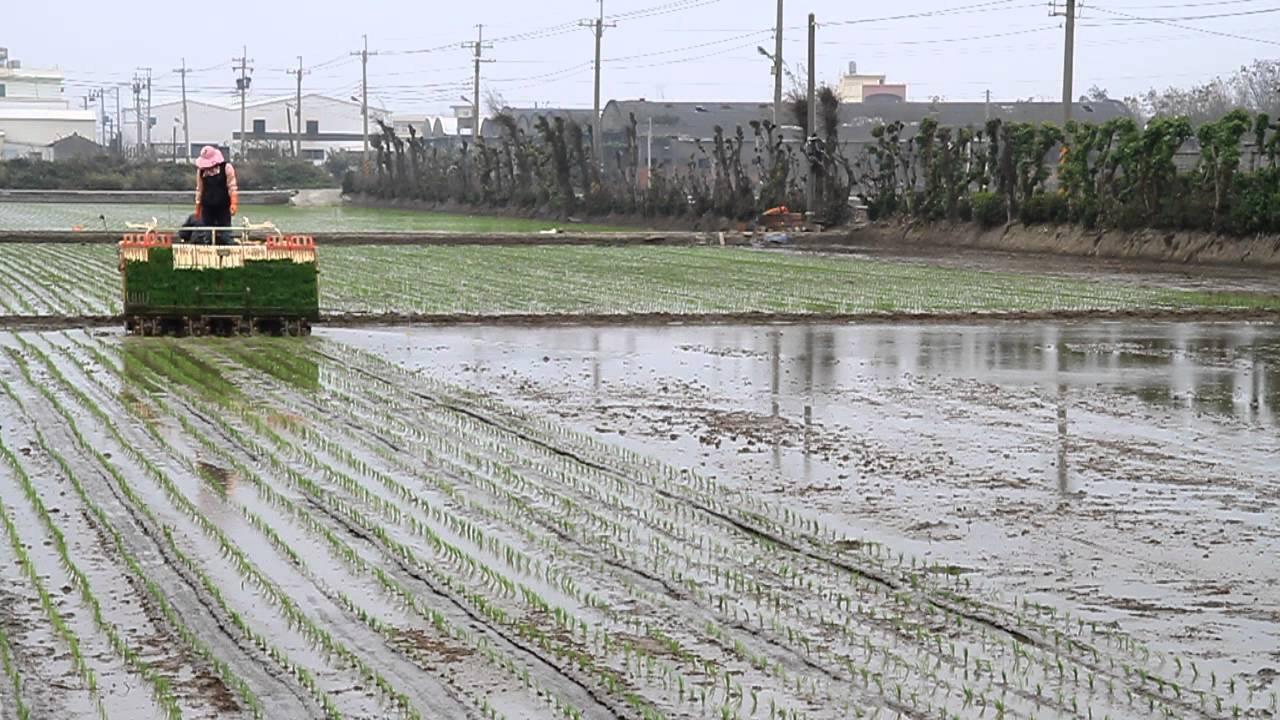 20120303-臺灣-彰化縣線西鄉-一期稻作插秧-使用日本-YANMAR -VP80D插秧機 - YouTube