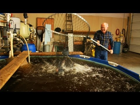 Designing a Sustainable Aquaponics System: An Inventor's Touch