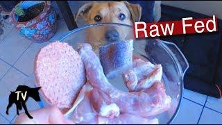 Raw Turkey Neck Raw Dog Food