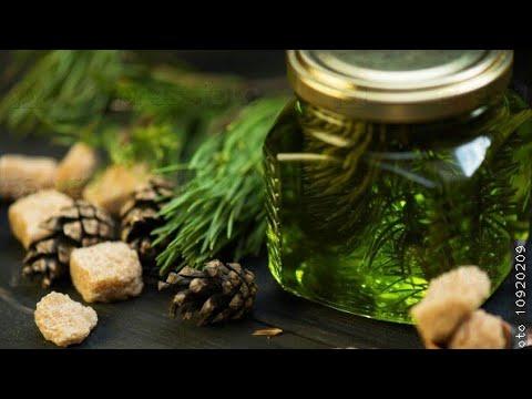 Как сделать целебный сироп из елочных веточек для лечения бронхов и легких.
