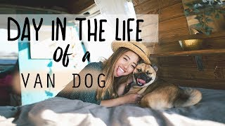 VAN LIFE | Day In The Life Of A Van Dog Vlog |