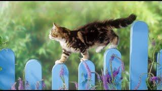 Милые Котики! Смешное Видео с Кошками 2015! №7
