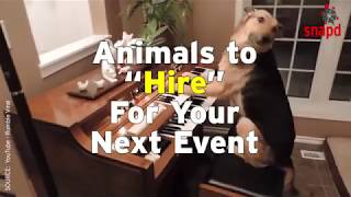 Animals to Hire for Your Next Event