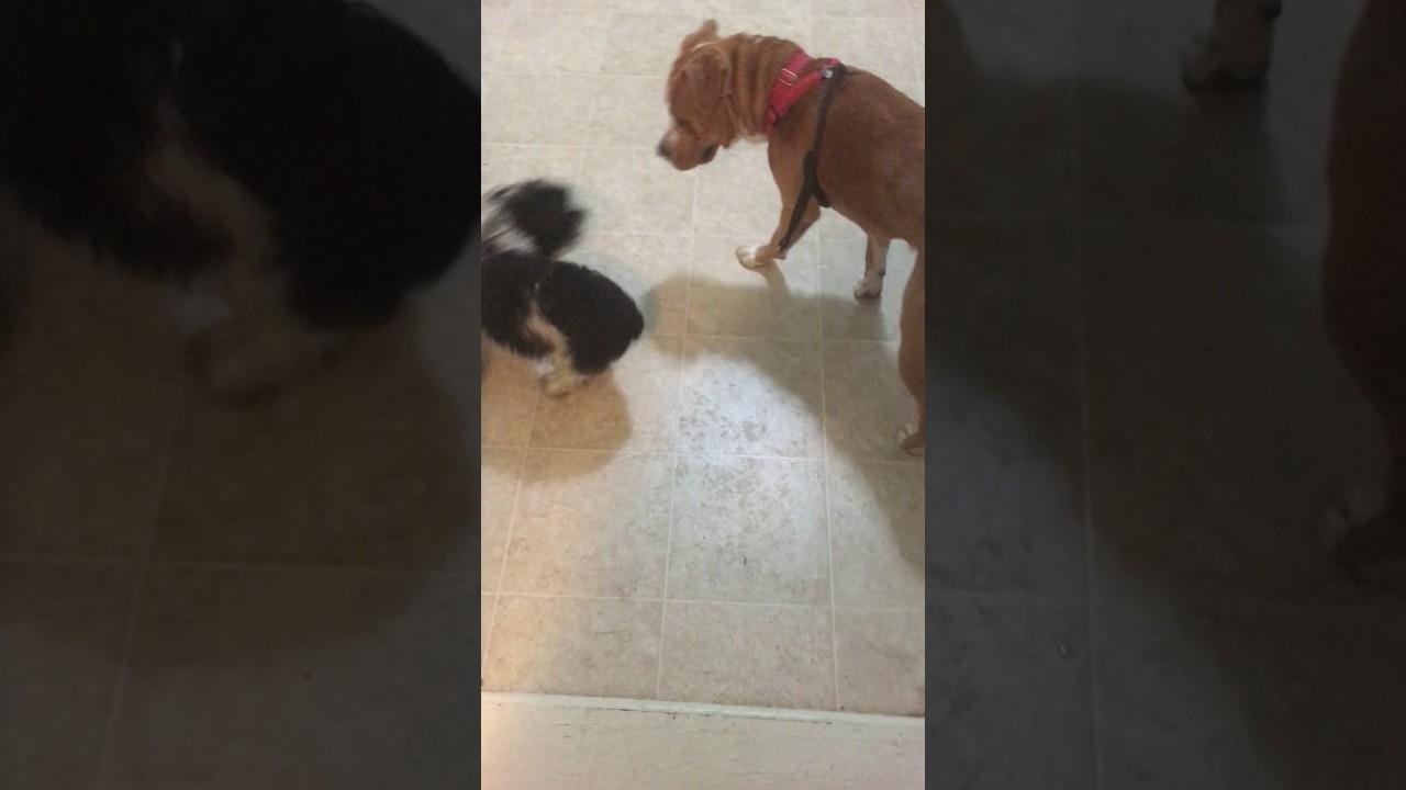 big dog pussy
