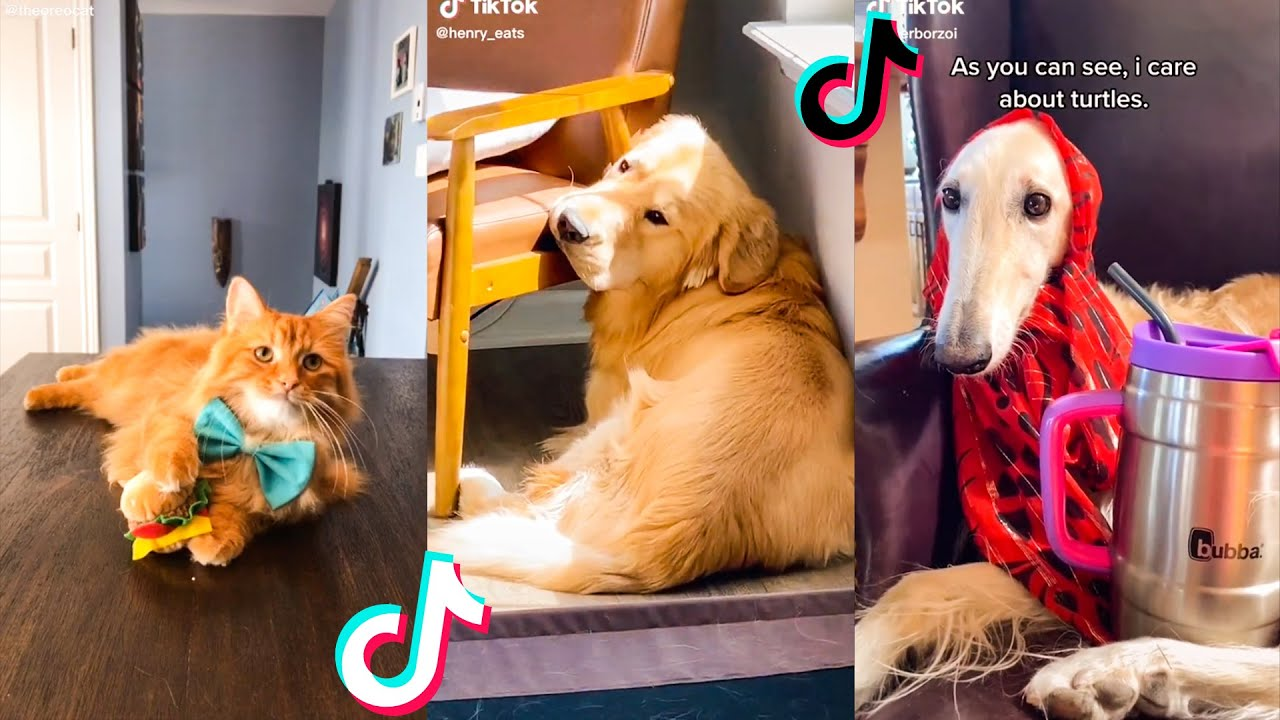 Animals Soo Cute You Have to See Them TikTok Compilation🥰