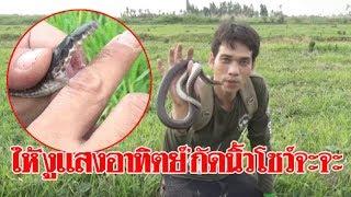 ให้'งูแสงอาทิตย์'กัดนิ้วโชว์จะจะ! หนุ่มพิสูจน์งูชนิดนี้ไม่มีพิษ เลิกเข้าใจผิด