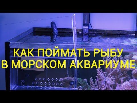 Как поймать рыбу в морском аквариуме