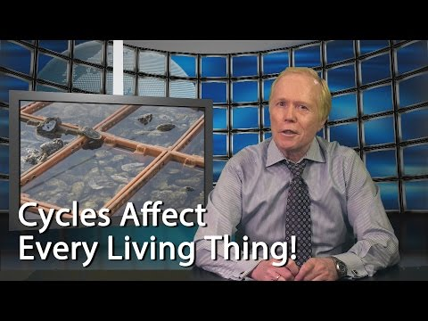 Cycles Affect Every Living Thing