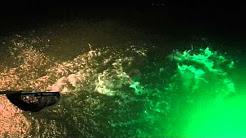 Clem's Marina - Huge Black Drum - Corpus Christi,